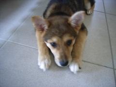 エース子犬