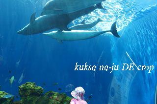 DSC02611_R.jpg
