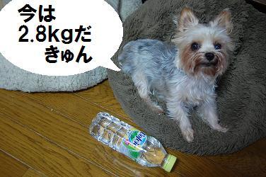 dog12.jpg