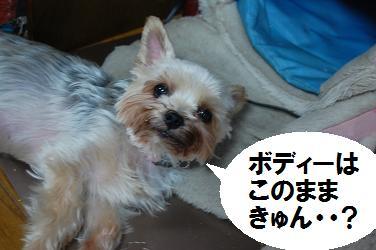 dog13.jpg