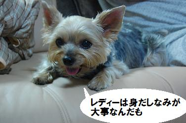 dog22.jpg