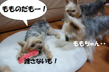 dog32.jpg