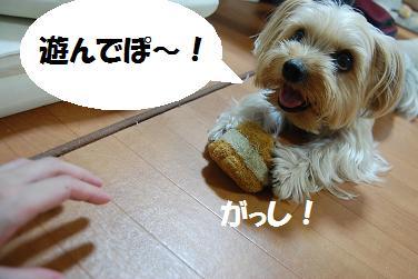 dog33.jpg