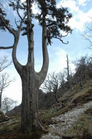 カッコいい木