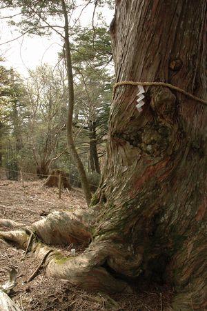 森の巨人たち100選