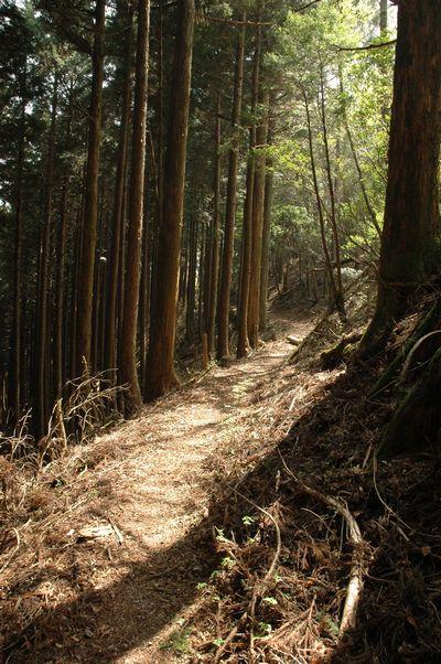 玉置山へと続く道