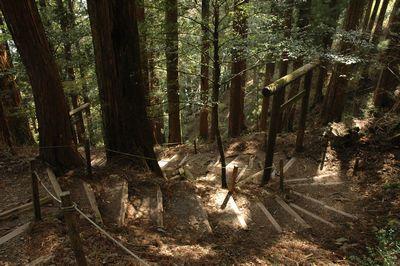 玉置山から玉置神社へ