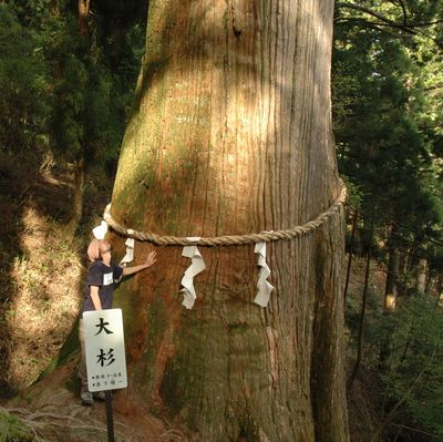 県内一の大杉