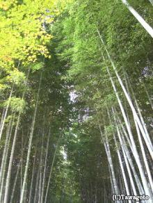 北野念仏寺