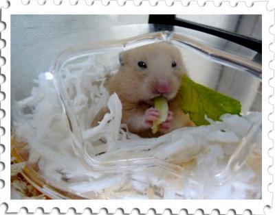 日記7・15小松菜食べ2