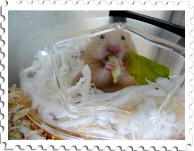 日記7・15小松菜食べ1
