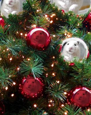 日記クリスマス虎太郎
