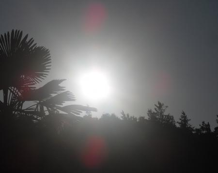 今日の朝日 1_convert_20110829082343