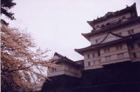 odaarajou2011