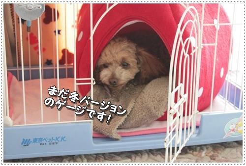 002kuramoka1_20110605140217.jpg