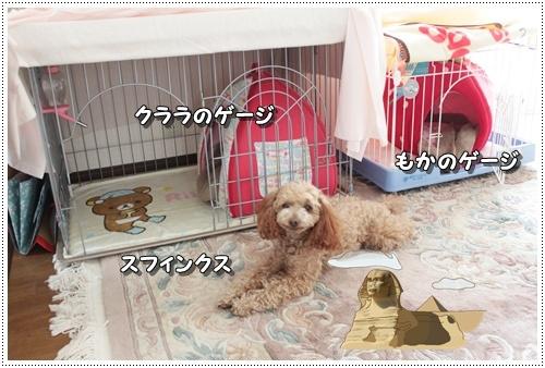 004kuramoka1_20110605140216.jpg