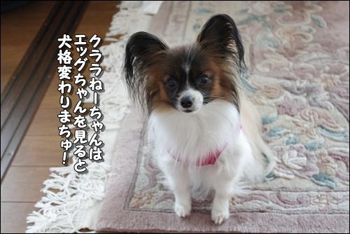 013kuramoka1_20110524160252.jpg