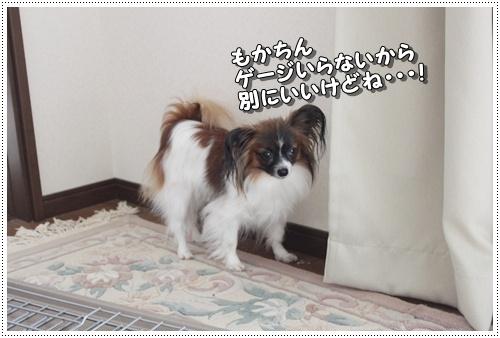 027kuramoka1_20110605140247.jpg