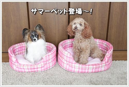 030kuramoka1_20110605140246.jpg