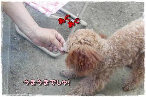032kuramoka1_20110522133437.jpg