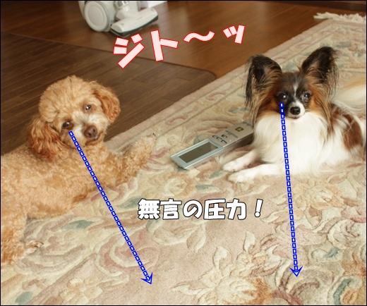 035_20110810135448.jpg