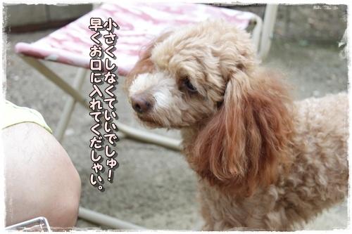 040kuramoka1_20110522133346.jpg