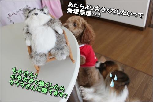 060kuramoka1_20110531161149.jpg