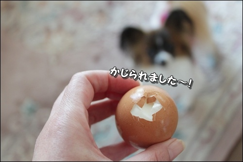 061kuramoka1_20110524160413.jpg