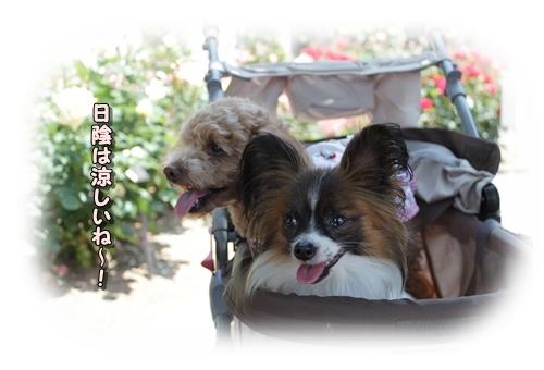 097kuramoka1_20110519142851.jpg