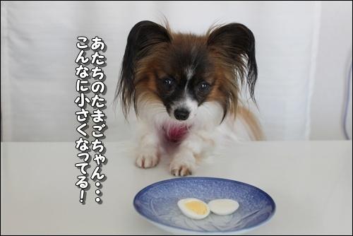 105kuramoka1_20110524160457.jpg