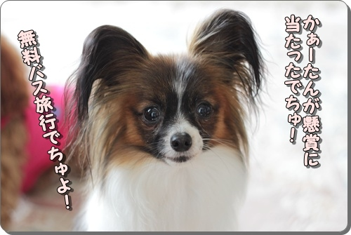 123kuramoka1_20110523163213.jpg