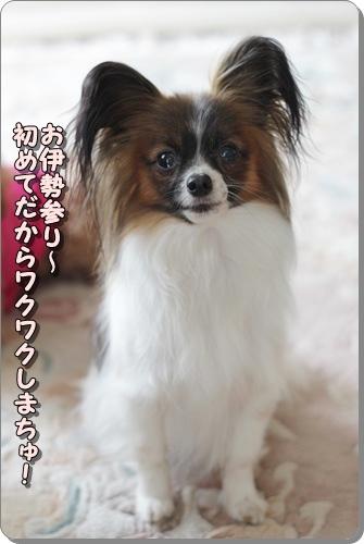 125kuramoka1_20110523163213.jpg