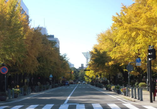 20121123_ichou_1