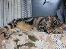 寝てるマロン