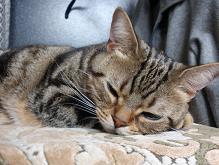 寝てるマロンアップ