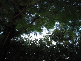 樹の蔭から見上げる空