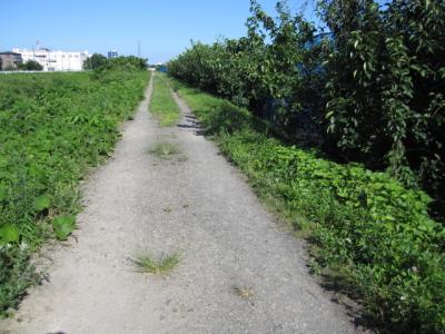右が梨畑、左が玉川