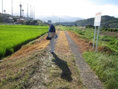 草刈り、除草剤といろいろ