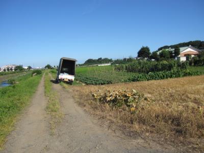 農作業のトラックも通る道なのです