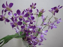 議場ロビーは、いつも花が飾ってあります