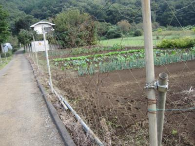 畑の周囲には防護の網
