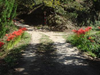栗山の彼岸花