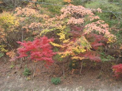 秋色の栗山
