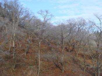 栗山冬景色