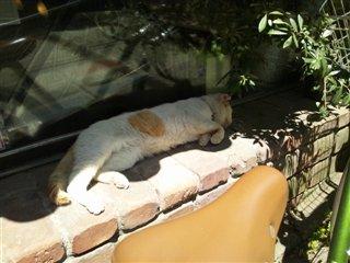 お店の猫ちゃん