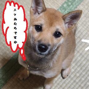ANZU1_20110118221251.jpg