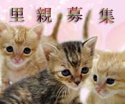 子猫バナー