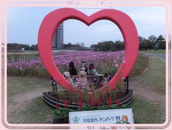豬懷錐貉悶ぎ繝シ繝・Φ繝代・繧ッ・狙convert_20121015114424
