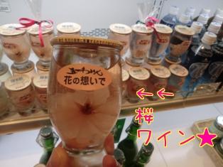 2011-2sakurawainn.jpg