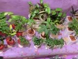 2011-2植物